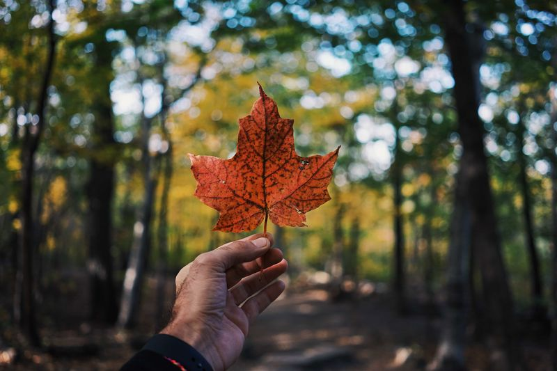 hand holding maple leaf in Canadian forest | visit Canada