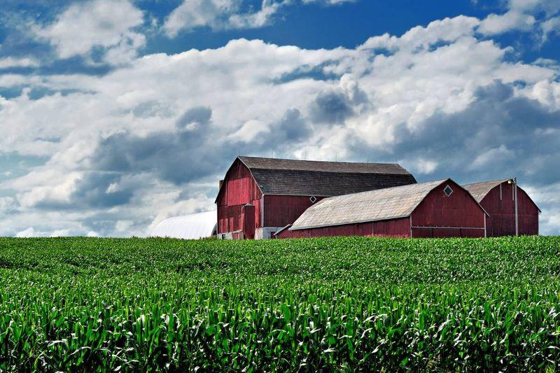 red barn on corn farm in Canada | jobs in Canada